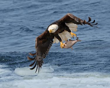 Eagle 5751