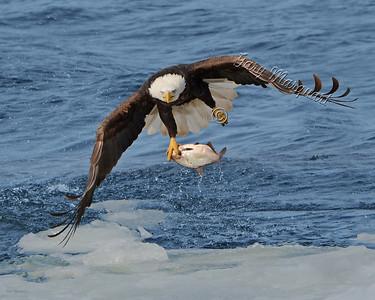 Eagle 5749