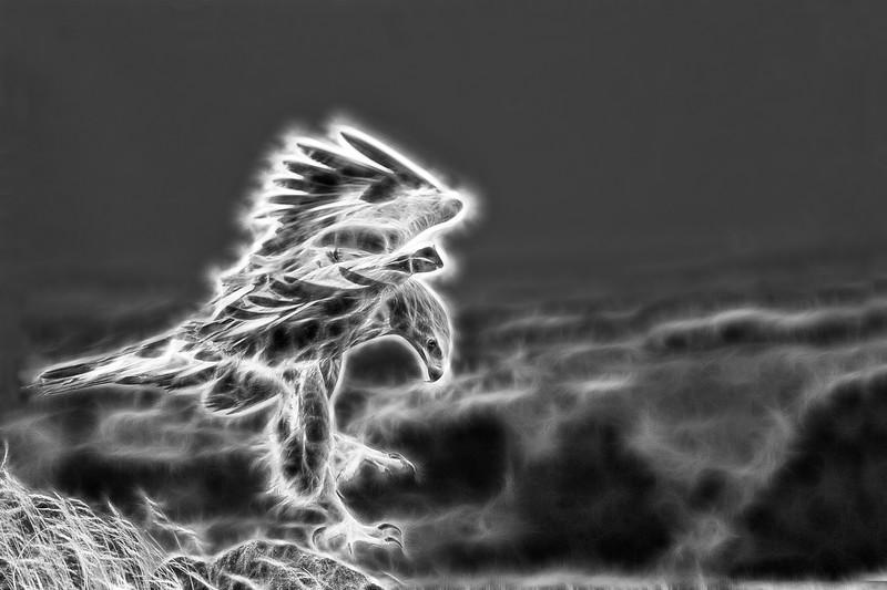 Golden Eagle ( b&w fractalius photoshop)