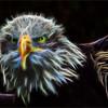 bald Eagle  (fractalius photoshoped)