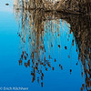 Reed mirrored on Lake Baldegg, Canton Lucerne