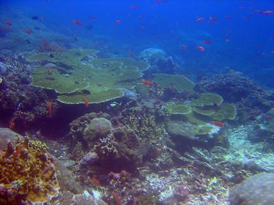 Nusa Penida - SD 2?