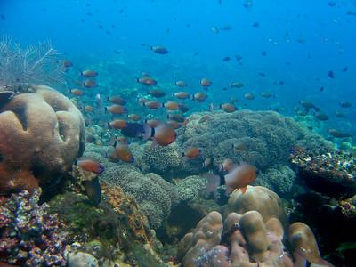 Tulamben - House Reef Snorkel