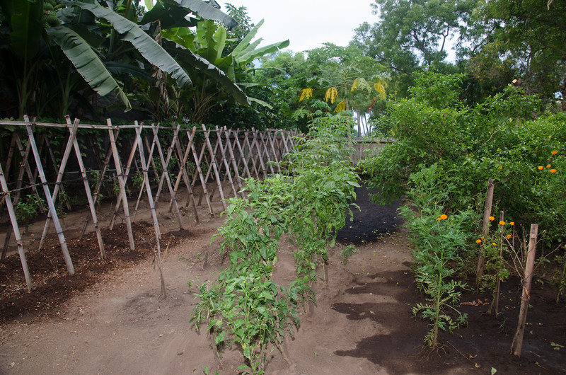 Villa Markisa organic garden....have had LOTS of rain on Bali so garden is behind schedule