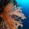 Liberty Wreck - Bali by Tracey Jennings