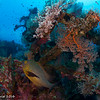 Liberty Wreck - Bali by Tracey Jennings