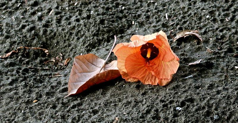 Une fleur sans amour perd ses couleurs