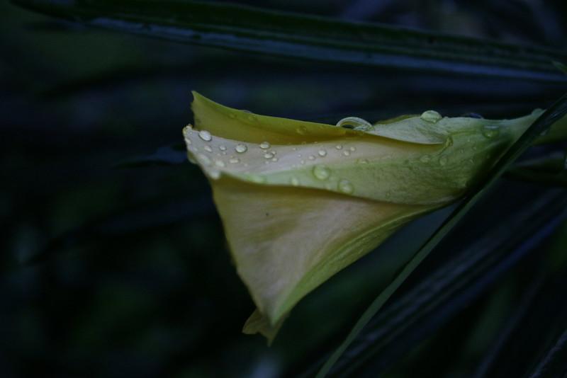 Certaines fleurs s'épanouissent mieux dans la pénombre...