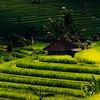 Farmers' Shack at Jatiluwah