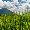 Rice field and Mountain.