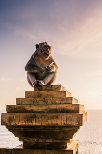 Monkey at Uluwatu Temple.