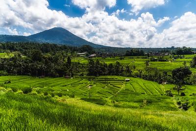 Jutiluwih Rice Field.