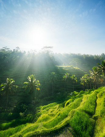 Tegalalang rice fields, Bali