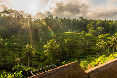 Sunrise at Tegalalang Rice Terrace.