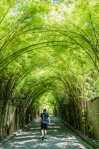 The Bamboo trees driveway at W Bali.