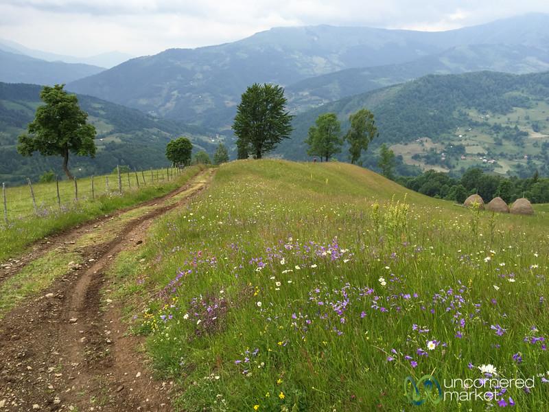 Wildflowers in Treskavica En Route to Plav, Montenegro