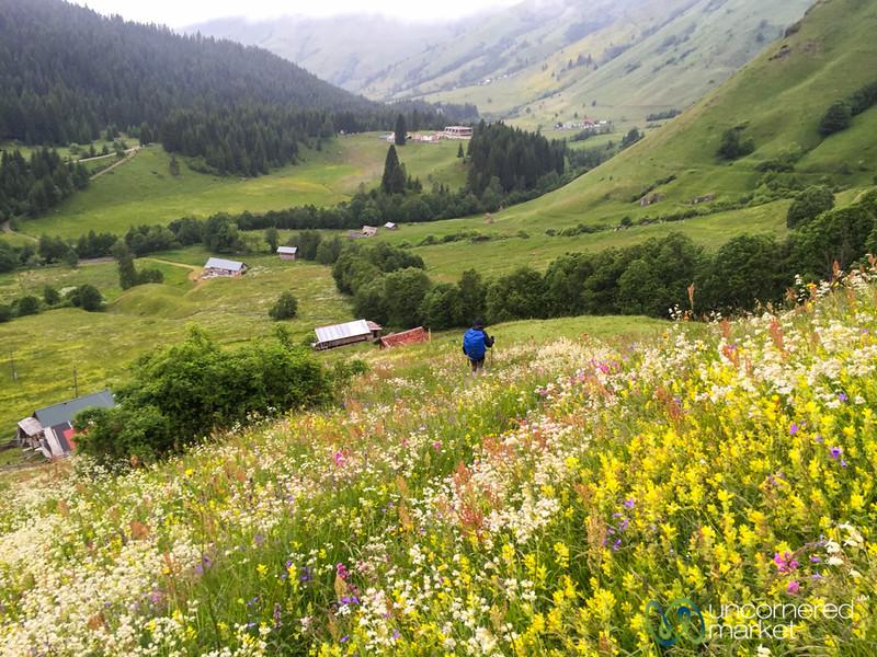 Wildflowers in Bloom - Babino Polje, Montenegro