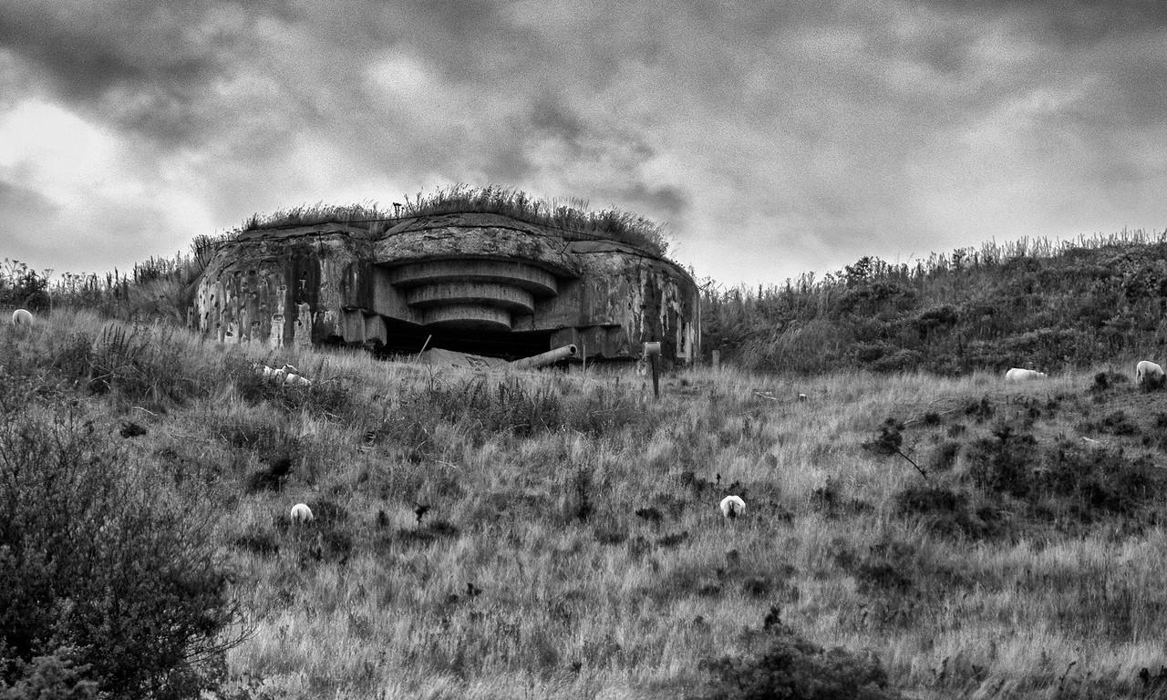 Sheep Grazing at WWII German Gun Implacement near Skagen