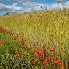 """""""Agrarian"""" - Saaremaa Island, Estonia"""