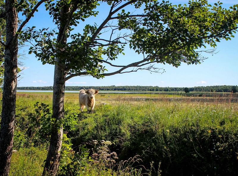 """""""Protectors"""" - Saaremaa Island, Estonia"""
