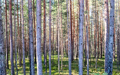 Zwischen Pärnu und Riga