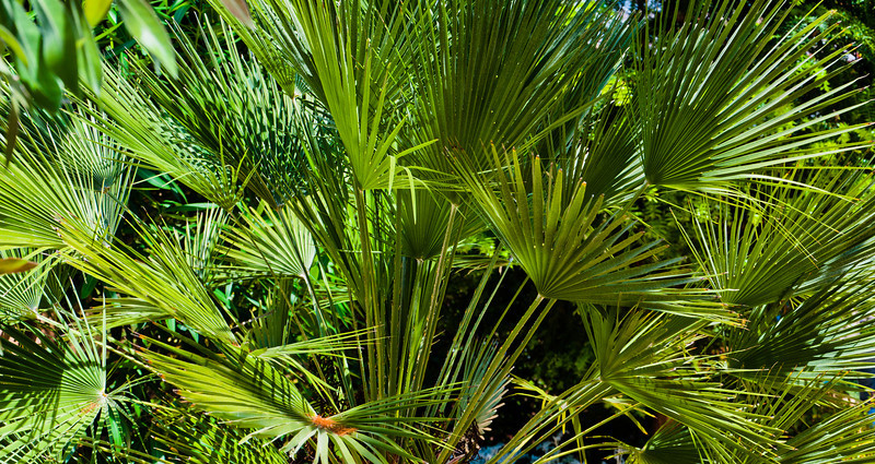 Tropical Plants in Howard Peter Rawlings Conservatory, Baltimore, Maryland