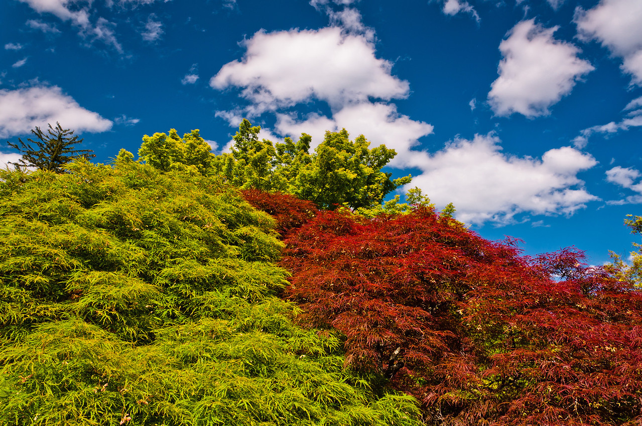 Colorful Bushes at Cylburn Arboretum, Baltimore, Maryland