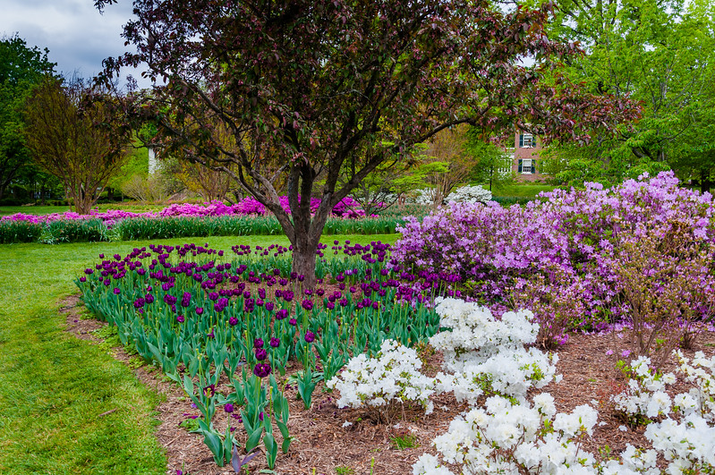 Gardens and trees at Sherwood Gardens Park in Guilford, Baltimore, Maryland.