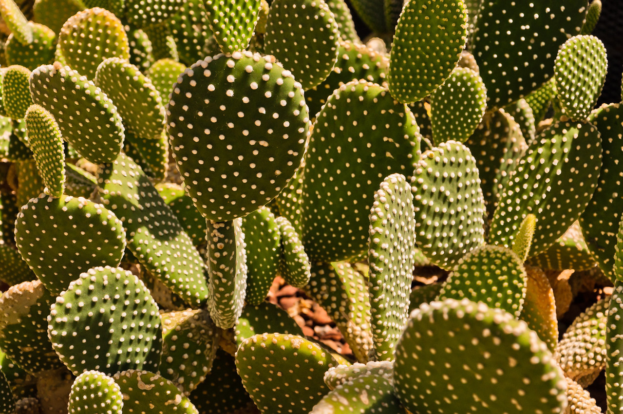 Cactus in Howard Peter Rawlings Conservatory, Baltimore, Maryland