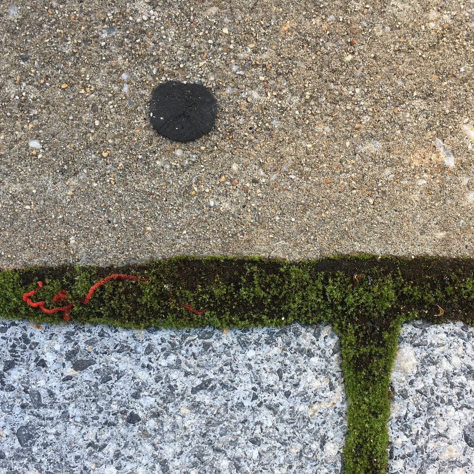 The moss is eating the red thread (Oct 2016)
