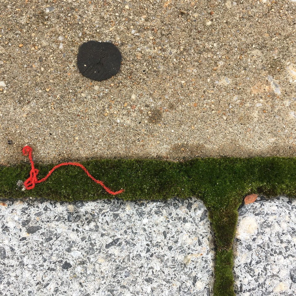Red thread on moss, June 2016