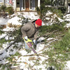 Dennis working magic with the chain saw. Getting rid of a tree that had fallen across the street