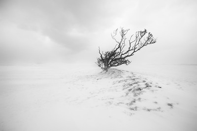 Tree in the Storm, Co Louth Golf Club-1L8A1431