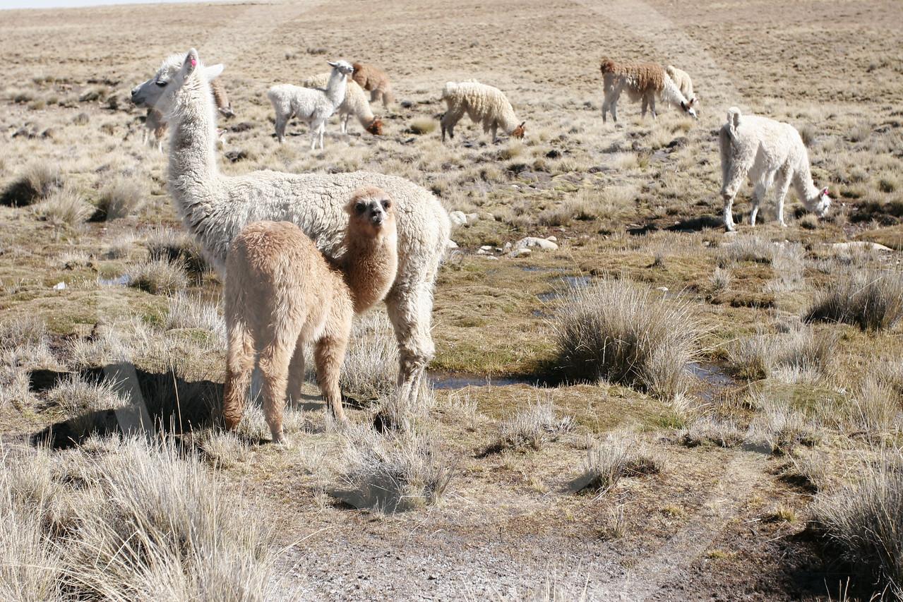 Bolivia062006833