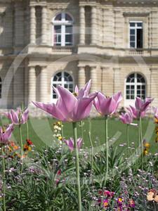 Paris04201118_19-071
