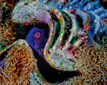 Blenny and Clam