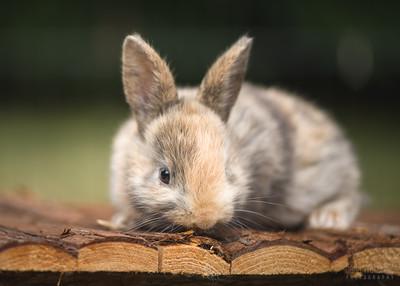 20150628-BfB-Rabbits-036