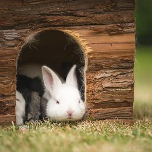20150628-BfB-Rabbits-157