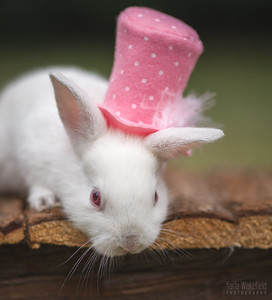 20150628-BfB-Rabbits-163