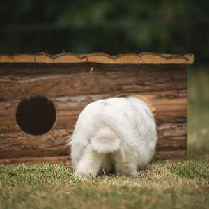 20150628-BfB-Rabbits-198
