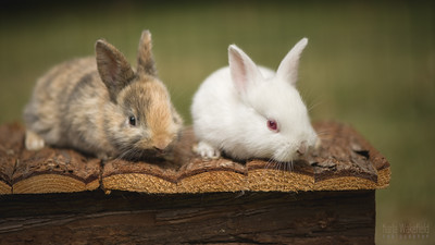 20150628-BfB-Rabbits-040