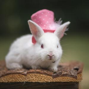 20150628-BfB-Rabbits-169