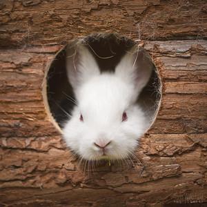 20150628-BfB-Rabbits-094