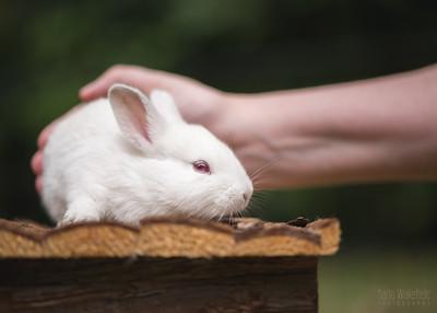 20150628-BfB-Rabbits-068