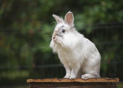 20150628-BfB-Rabbits-200