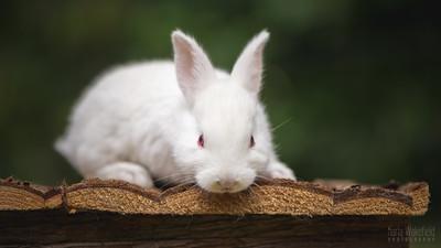 20150628-BfB-Rabbits-079