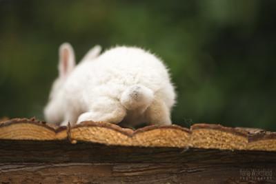 20150628-BfB-Rabbits-080
