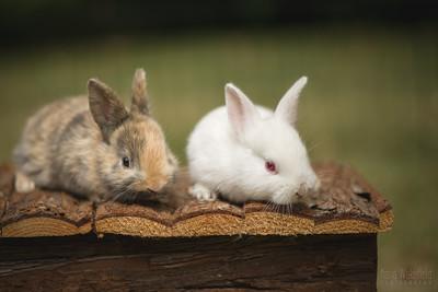 20150628-BfB-Rabbits-040-2