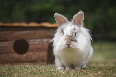 20150628-BfB-Rabbits-213