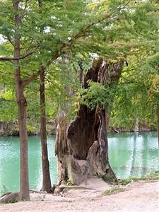 +++A241836 Bandera City Park - Cypress – Version 2